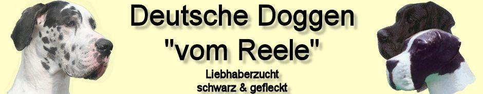 Deutsche Doggen vom Reele